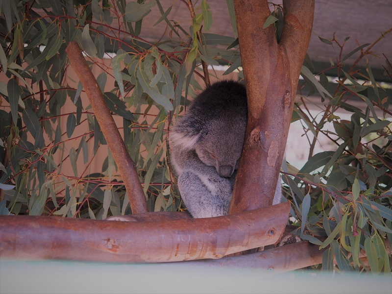 want-an-adventure-in-cavershem-wildlife-park-perth-get-it-now-with-explore-tours-perth-cavershem-wildfire-park-2.jpg