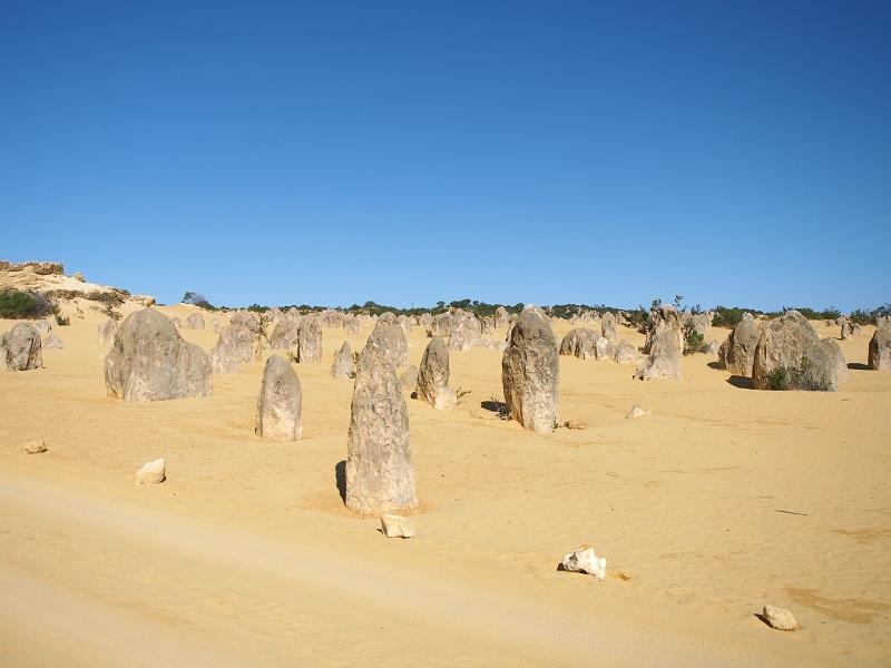 want-an-adventure-in-cavershem-wildlife-park-perth-get-it-now-with-explore-tours-perth-pinnacles-3.jpg